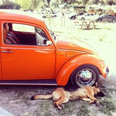 Awe cute.. a dog laying next to a VW beetle