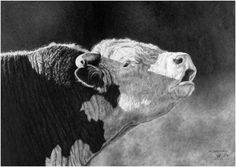 Pencil Art Gallery - Pencil Artist Dino Cornay - Pencil Artwork - New Ideas Hereford Cattle, Charro, Cow Painting, Cow Art, Western Art, Pictures To Paint, Pencil Art, Amazing Art, Art Drawings