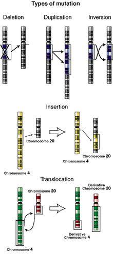 Mutação – Em Biologia, mutações são mudanças na sequência dos nucleotídeos do material genético de um organismo. Mutações podem ser causadas por erros de copia do material durante a divisão celular, por exposição a radiação ultravioleta ou ionizante, mutagênicos químicos, ou vírus