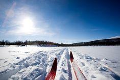 Missoula Montana Cross Country Skiing, Nordic / X-Country University Of Alberta, Skiing Colorado, Colorado Trip, Celiac Disease, Cross Country Skiing, Winter Activities, Seasons Activities, Olympians, The Good Place