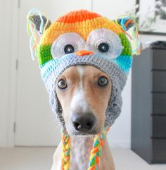 """Don't call me, Owl call you"" ~Simon   Enter your furbabies to HOWLAND STUDIOS Most Fabulous Pet Photo CAPTION Contest! http://howlandstudios.com/contest-2/ — with April Howland-Artist."