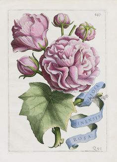 Giovanni Battista Ferrari Flora Prints 1638