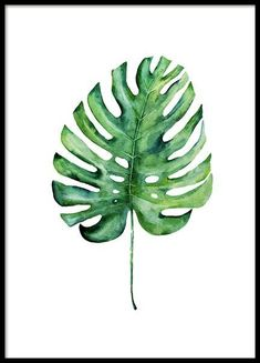 Monstera Aquarell One Poster in the group Posters & Prints / Botanical at Deseni.Monstera Aquarell One Poster in the group Posters & Prints / Botanical at Desenio AB Green Watercolor, Watercolor Leaves, Watercolor Art, Plant Painting, Plant Art, Gold Poster, Groups Poster, Simple Poster, Watercolors