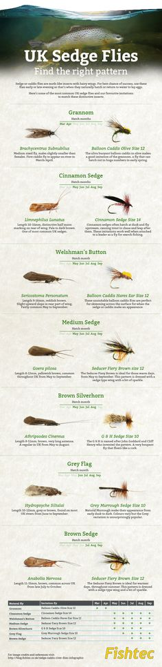 uk sedge and caddis fly fishing infographic