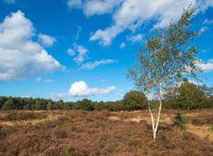 Fietsroute Door de heide van de Veluwe | Fietsen123 Holland, Country Roads, Plants, Pagan, The Nederlands, The Netherlands, Netherlands, Plant, Planets