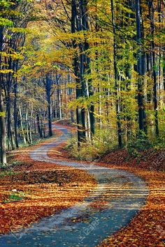 Country Road take me home. Beautiful World, Beautiful Places, Beautiful Forest, Back Road, Winding Road, Take Me Home, Pathways, Belle Photo, Nature Photography
