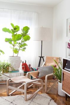 Easy tips for keeping a fiddle leaf fig happy!
