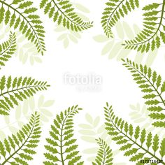 fern, leaf, vector, illustration, pattern, white, background, green, foliage, plant, grass, floral, summer, forest, tropical, isolated, frond, design, silhouette, branch, black, nature, botanical, jungle, spring, frame, flora, tree, art, season, leaves, stem, ferns, botany, sign, element, bracken, print, natural, organic, fall, rainforest, botanic, drawing, fresh, park, rustic