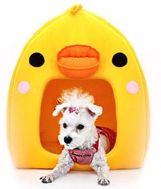 pet dog house 애견하우스