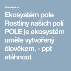 Ekosystém pole Rostliny našich polí POLE je ekosystém uměle vytvořený člověkem. -  ppt stáhnout