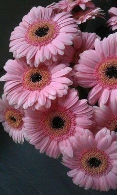 Pin Image by Dicosplay Sunflowers And Daisies, All Flowers, Gerber Daisies, Amazing Flowers, Pretty Flowers, Wedding Flowers, Daisy Love, Pink Daisy, Art Floral