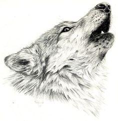 Resultado de imagen para dibujos realistas de lobos