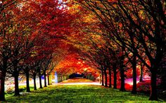 Colorful Autumn Trees Park photos