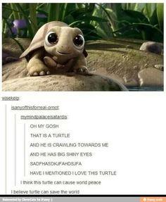 Shiny eyed turtles