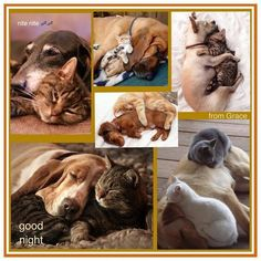 Cats 🐱 and Dogs 🐶 Beautiful Collage, Beautiful Dogs, Collages, Animals Amazing, Color Collage, Mood Colors, Cute Funny Animals, Dog Quotes, Good Night