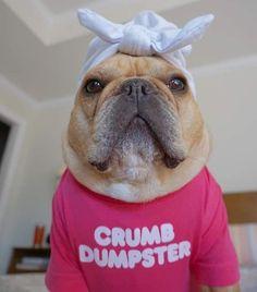 Pugs Dressed Up, Finding Joy, French Bulldog, Laughter, Dogs, Animals, Animales, Animaux, French Bulldog Shedding