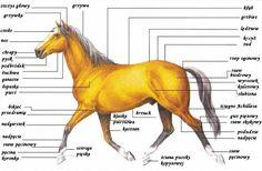 Achilles, Horse Riding, Cute Animals, Horses, Buxus, Cactus, Pretty Animals, Cutest Animals, Cute Funny Animals