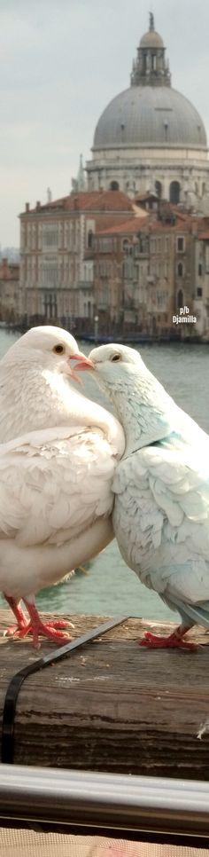 Love Birds - Venice Italy
