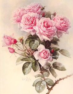 ... Pink Roses PRINT Paul de Longpre Rose 2 Frame, Scrapbook, Decoupage