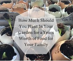 "Every year I go through the same thing and ask myself the same question: ""how much should I plant in our garden to supply my family with enough food for the winter?"" Are you trying to f…"