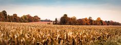 A panoramic view of an autumn farm, digitally captured & retouched by our studio