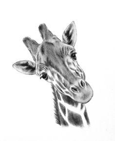 "Original Charcoal Giraffe Drawing, 5""x7"" Giraffe Art, Nursery Art, Giraffe…"