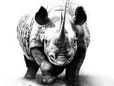 Cool Rhino Tattoos | Rhino Pencil Drawing