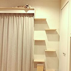 Cat Walkway, Cat Wall, Cat Furniture, Habitats, Diy Projects, Curtains, Cats, Room, House