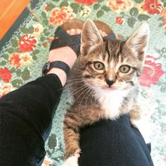 This is the face of a determined kitten. This determined kitten  is the reason why my kitten wrangling uniform is denim. by theittybittykittycommittee