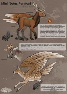 Peryton, I actually had to look it up, these are a real mythical beast Mythical Creatures Art, Mythological Creatures, Magical Creatures, Creature Drawings, Animal Drawings, Wolf Drawings, Creature Concept Art, Creature Design, Character Inspiration