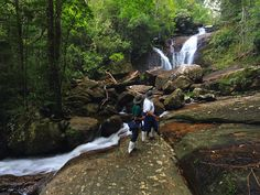 Sinharaja Forest Reserve is a National Park and a biodiversity hotspot in Sri Lanka. Sinharaja Rain Forest is of international significance and has been designated a Biosphere Reserve and World Heritage Site by UNESCO.