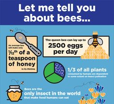 Let me tell you about bees... 😊🐝🐝🐝 #bees #bee_facts #bee_informed #food #pollinators