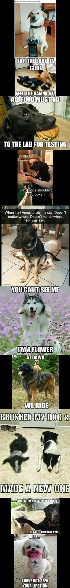 Top 10 Funny Pictures Of The Day ft. Funny Dogs - Funny Dog Quotes - Top 10 Funny Pictures Of The Day ft. Funny Dogs The post Top 10 Funny Pictures Of The Day ft. Funny Dogs appeared first on Gag Dad. Funny Animal Jokes, Really Funny Memes, Cute Funny Animals, Stupid Funny Memes, Haha Funny, Funny Cute, Funny Dogs, Super Funny, Hilarious