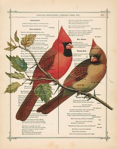 cardinals. My grandmother's favorite bird.  Seems she had a picture like this in her living room