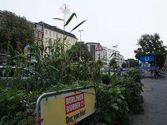 Urbanes Gärtnern in Berlin oder ein Mais- und Sonnenblumenfeld an der Straße