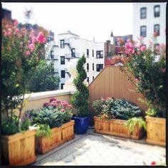 Beautiful Work by Amber Freda & Garden Design by Amber Freda www.amberfreda.com  #CeramicPots #MediterraneanGarden #RooftopGarden #BrooklynGarden #ContainerGarden #NewYorkCity