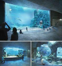boltshauser architekten beats zaha hadid + MVRDV to design basel aquarium, Zaha Hadid, Aquarium Architecture, Zoo Architecture, Aquarium Design, Basel, Mon Zoo, Cool Fish Tanks, Amazing Aquariums, Nature Aquarium