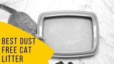 Best Dust Free Cat Litter Tidy Cats, Clumping Cat Litter, Free Cat, Litter Box, Cool Cats, Your Pet, Toilets, Sandbox