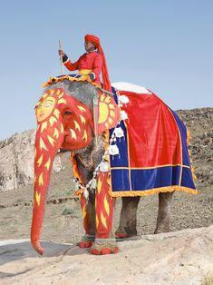 painted elephant in jaipur, india