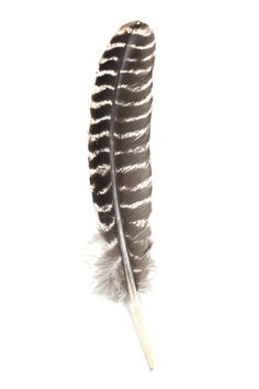 Hang this feather in your home or use it to burn sage.