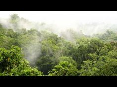 ▶ Rainforest sound 11 hours. Rainforest Reverie, natural sound of a rainforest for relaxation, yoga - YouTube