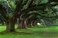 Bilder, Park, Wald, Bäume, Natur, Gras, grün, Sommer, Frühling ...
