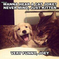 Wanna hear a cat joke? That is SOOOOOOOOOOOO funny and I don't mean the joke I mean the dogs face is the cutest!!!