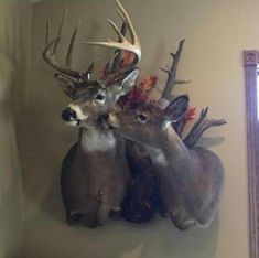 Buck and doe mount: johnson and my deer Deer Mount Decor, Deer Decor, Deer Hunting Decor, Bow Hunting, Hunting Humor, Deer Skulls, Deer Antlers, Taxidermy Decor, Taxidermy Display