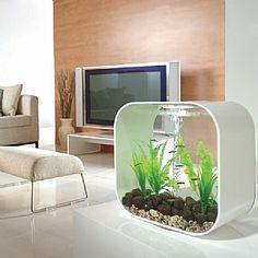 Zo'n aquarium wil ik wel