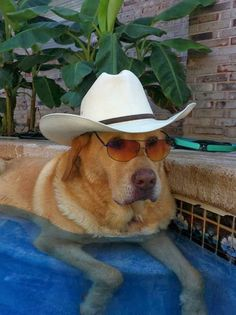 Just has to be a true Texas dog.