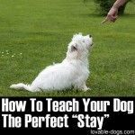 """How To Teach Your Dog The Perfect """"Stay"""""""