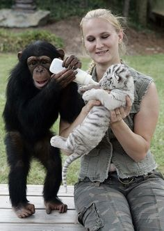 Unusual animal friendship Monkey giving milk to the little white tiger