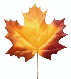 1,80 zł - FloSublime Liść Klonu Ozdobny Jesienny 75 cm @ FloSublime