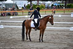 Pony halted at X during dressage